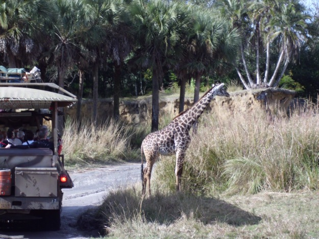 Op safari.. in Florida!