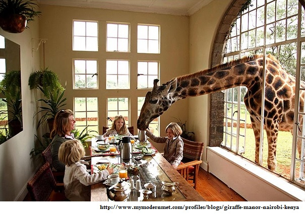 pic giraffe manor